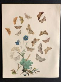 Humphreys & Westwood British Moths 1845 Hand Col Print 61